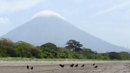Black Vulture, Rabengeier, Coragyps atratus, Volcan Concepcion, Concepcion volcano, Isla Ometepe