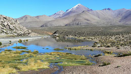 Lauca National Park, Lauca Nationalpark