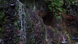 25 fontes Madeira