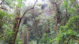 Volcan Baru National Park, Baru Vulkan