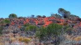 Red Soil, Outback