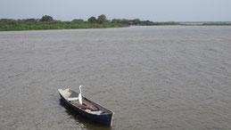 Great Egret, Silberreiher, Ardea alba, Lago Nicaragua