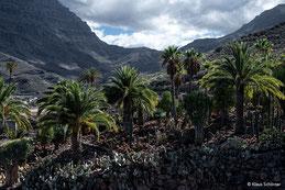 Gran Canaria, Kakteenlandschaft bei San Nicolas. Foto: Dr. Klaus Schörner