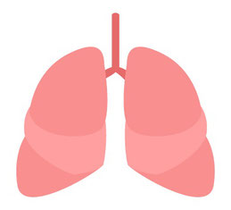 悲しみと関係する内臓:肺
