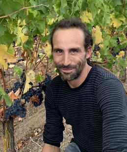 Travail des vignes à Saint-Nicolas de Bourgueil