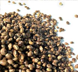semillas de cannabis en españa, comprar semillas de cannabis