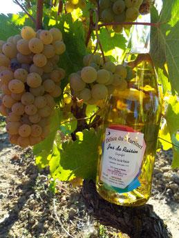 Bouteille de Délice du Martinet dans les vignes