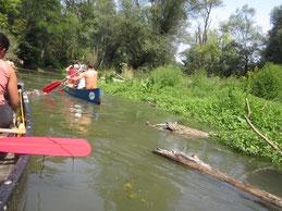 Mit dem Kanu durch die Auwildnis