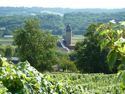 Viñedo de Comté Tolosan Vic-Bilh