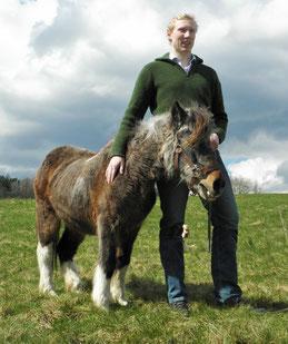 Pony Susi mit stolzen 40 Jahren