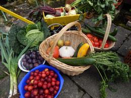 Im veganen Garten