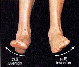 足首の捻挫としては圧倒的に内反の捻挫が多くなっています。