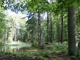 Systemische Familientherapie, Waldtherapie, Coaching in Verbindung mit Waldbaden