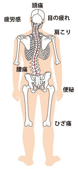 肩甲骨、肋骨のゆがみ
