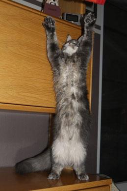Cougar kann auch Hands up