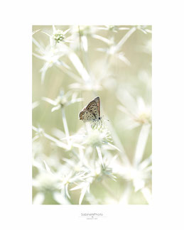 Schmetterling, Makro, Mittag, Fotografie