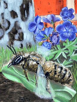 Der Storchschnabel ist eine ergiebige Tankstelle für Wildbienen.
