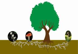 図1.樹木と菌類とギンリョウソウのつながりのイメージ