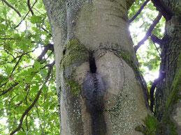 Fledermaushöhle
