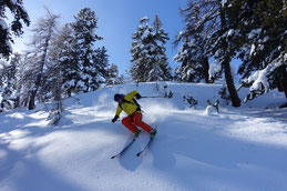 Tree-Skiing in den Lärchenwäldern von Livigno