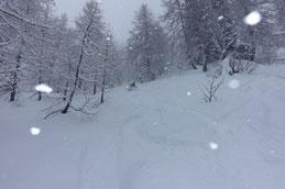 während dem Schneefall im Lärchenwald
