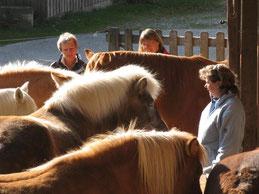 In Stille bei den Pferdxen