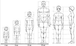 cours de sculpture morphologie proportions corps nouveausculpteur magne