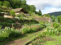 Les jardins en terrasse
