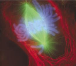 L'Âme se divise, telle une mitose cellulaire.
