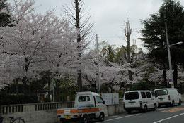 公園のまわりは花模様