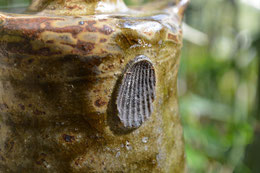 赤貝の目跡(貝目)