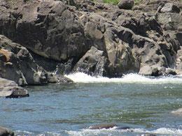 「五泉龍」は近年水量が減ったものの、  頼山陽が感動した理由を感じさせる。
