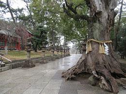 住吉神社の境内 2019年2月