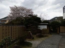 桜の運壁居