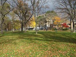広い敷地には落ち葉