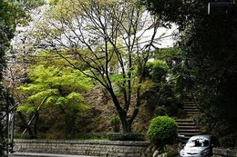 4月3日、ひろしまフォト歩きさん撮影