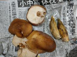 竹原から届いた筍と大きなシイタケ