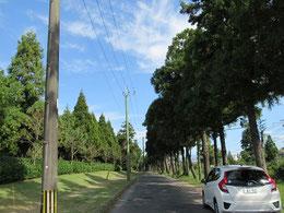 熊本県菊陽町の杉並木