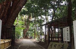 史跡生田の森