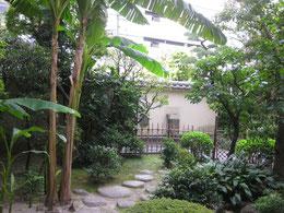 和室から見る庭。山陽が好んだ樹木が。