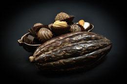 Xocolatl - Cabosse