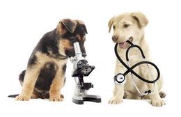 2 Welpen in der Tierarztpraxis zur Verhaltenstherapie