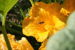 Cette photo montre bien l'importance des abeilles dans la pollinisation !