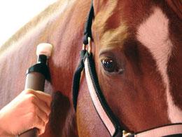 Halsbehandlung beim Pferd