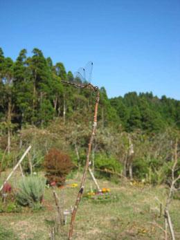 トンボが樹木葬地の木々にとまっています。