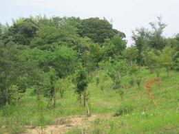 草が勢いよく伸び草刈りも大忙しです。第二樹木葬地