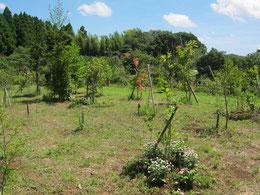 夏の第三樹木葬地