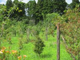 百合の花が足元を彩る第一樹木葬地