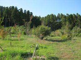 天気で暖かな日が続きます。トンボがたくさん飛ぶようになりました。第三樹木葬地