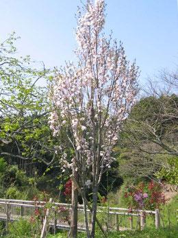樹木葬地の花が次々に咲き、眩しい季節になりました。